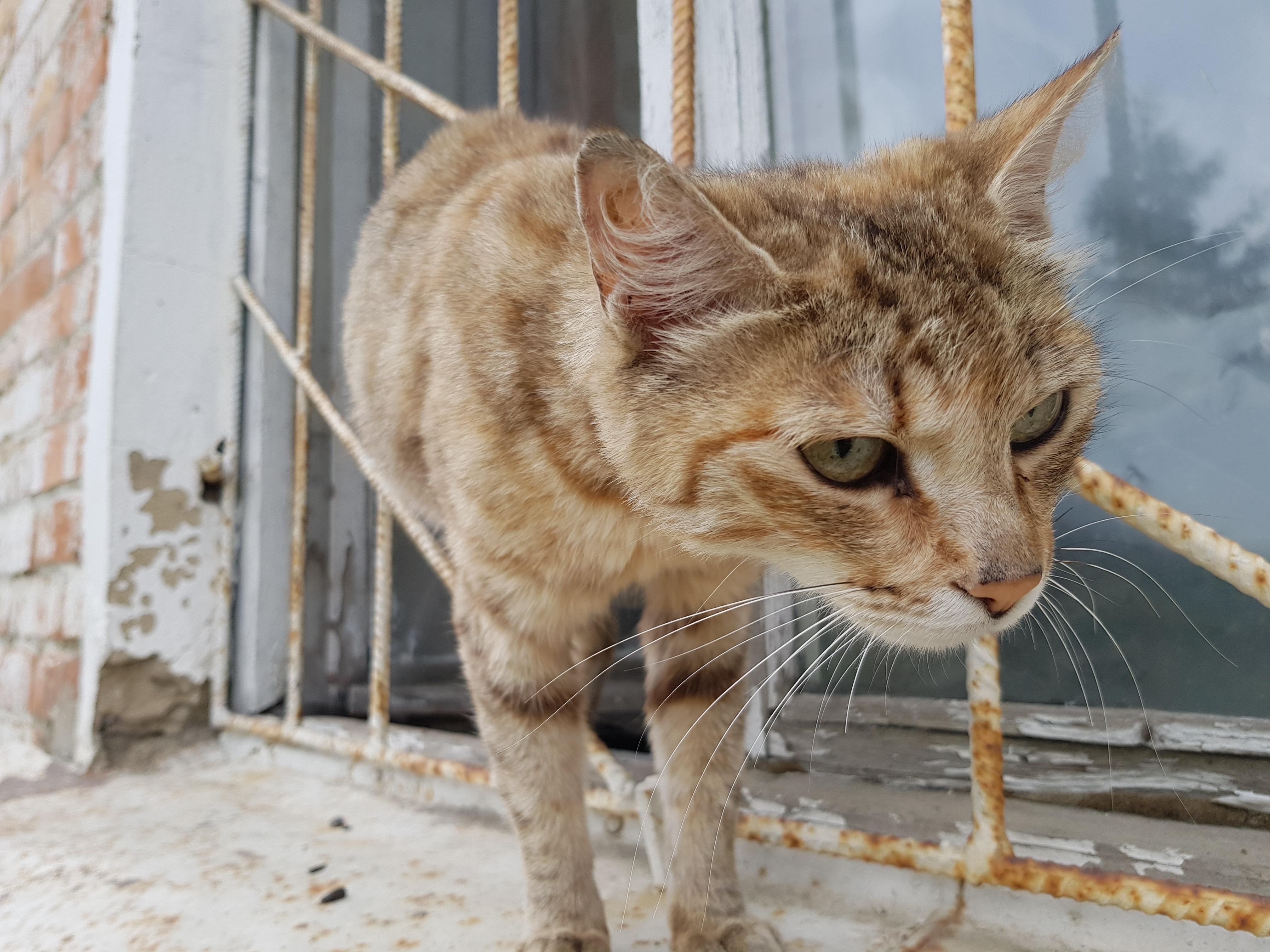 Кот с любопытством встречает гостей